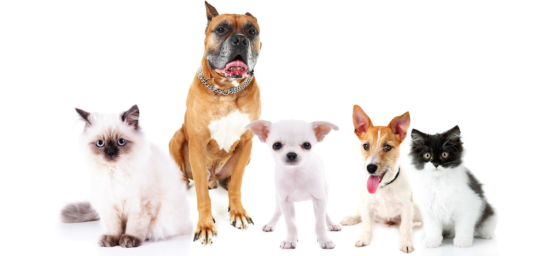 Jak wybrać odpowiednie posłanie dla psa lub kota?