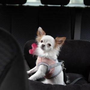 Siedzisko do auta Paris czarne dla małych i średnich psów