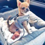 Siedzisko do auta Paris szare dla małych i średnich psów