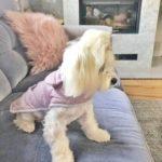 Chloes Home - Sienna jacket - kurtka dla psa Sienna